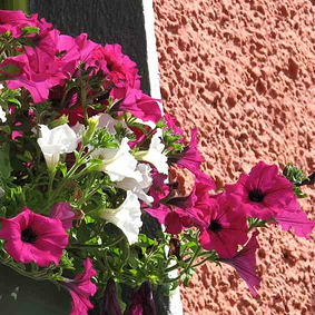 Kilcullen Summer Flowers
